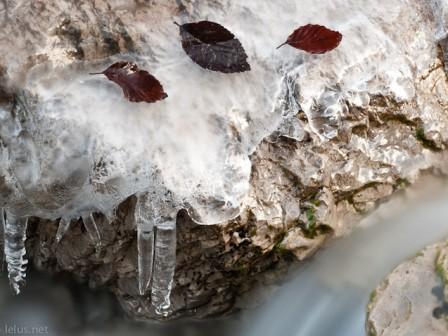gennaio - armentaria : : ph marco giordano
