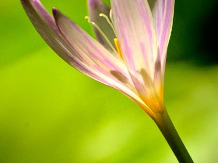 castenovo del friuli : : ph stefano palamin