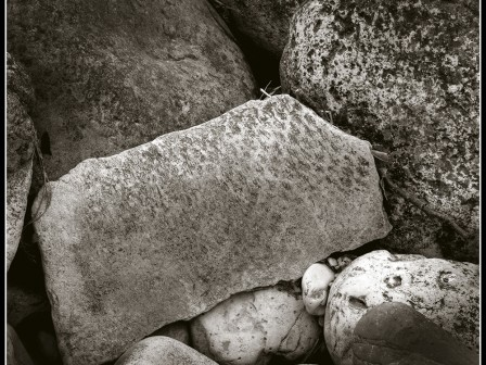 amianthus : : ph stefano palamin