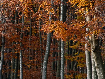 ottobre - monte pala : : ph marco giordano