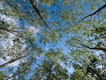 maggio - bosco romagno : : ph marco giordano